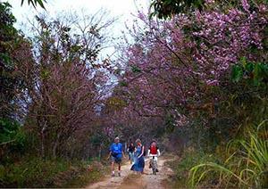Đi du lịch bụi rừng Nam Cát Tiên